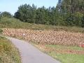 2006-09-26-009.JPG